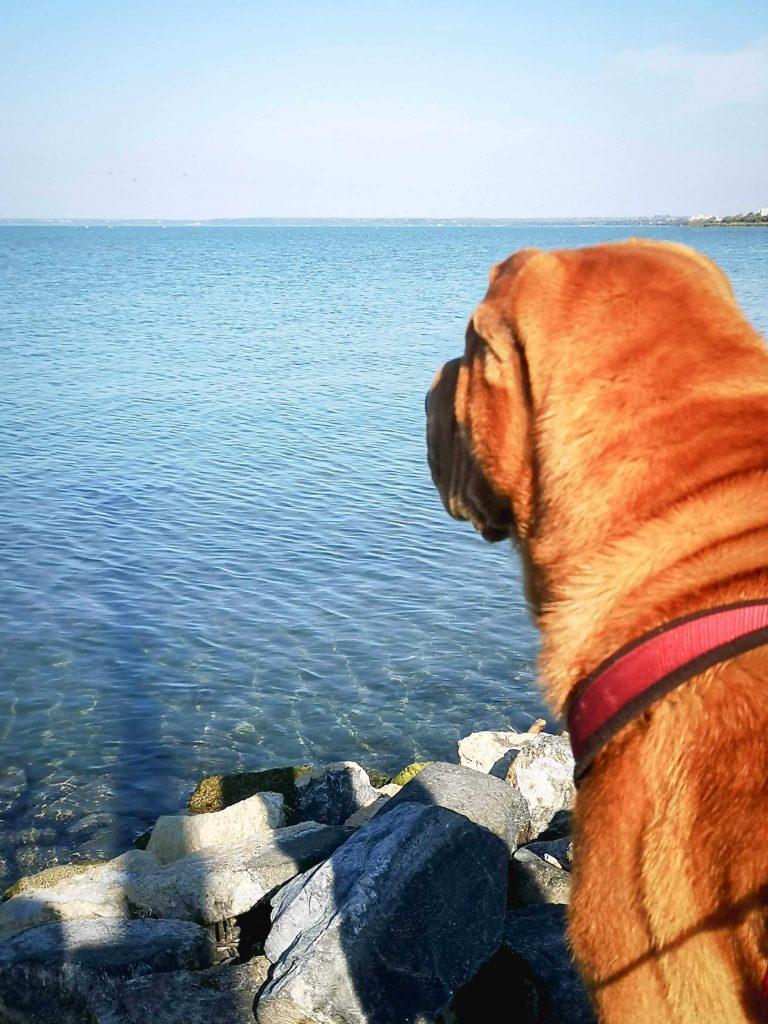 Kutyabarát szállás Siófokon