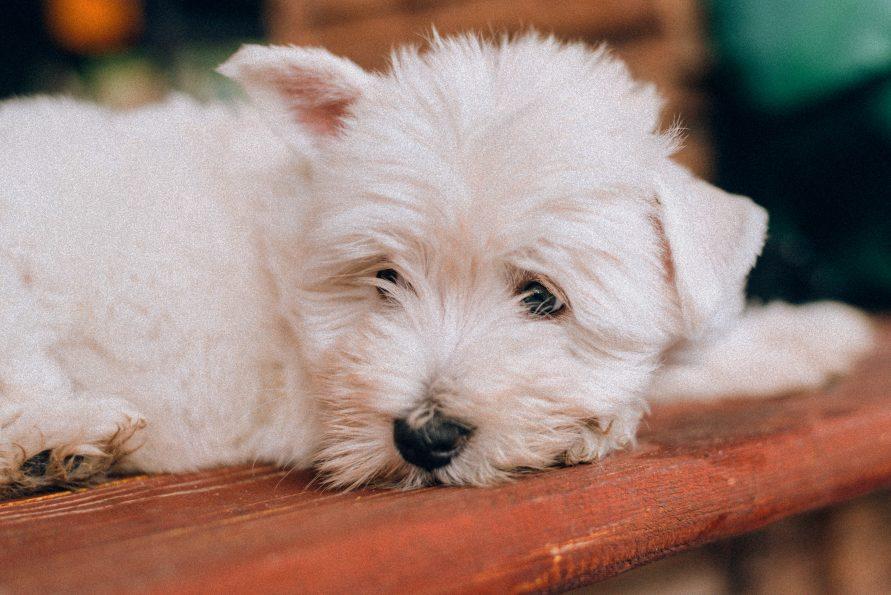 Online felmérést tart a kormány az állatvédelemről